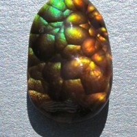 Tortoise Shell - Carved Arizona Fire Agate 5 ct