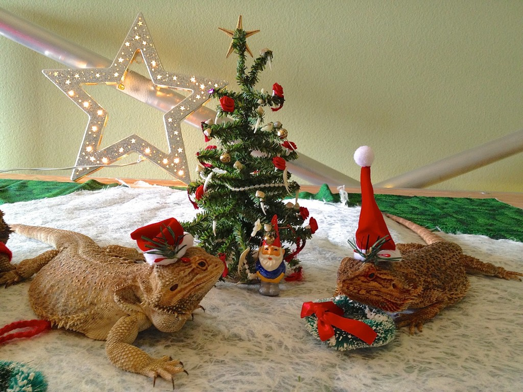 Christmas Lizards and Gnome 2