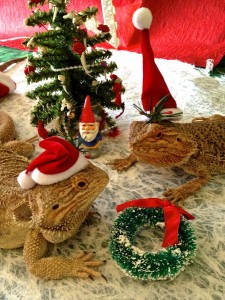 The Spirit of Christmas, Lizards