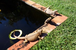 Three Lizards Spa Time