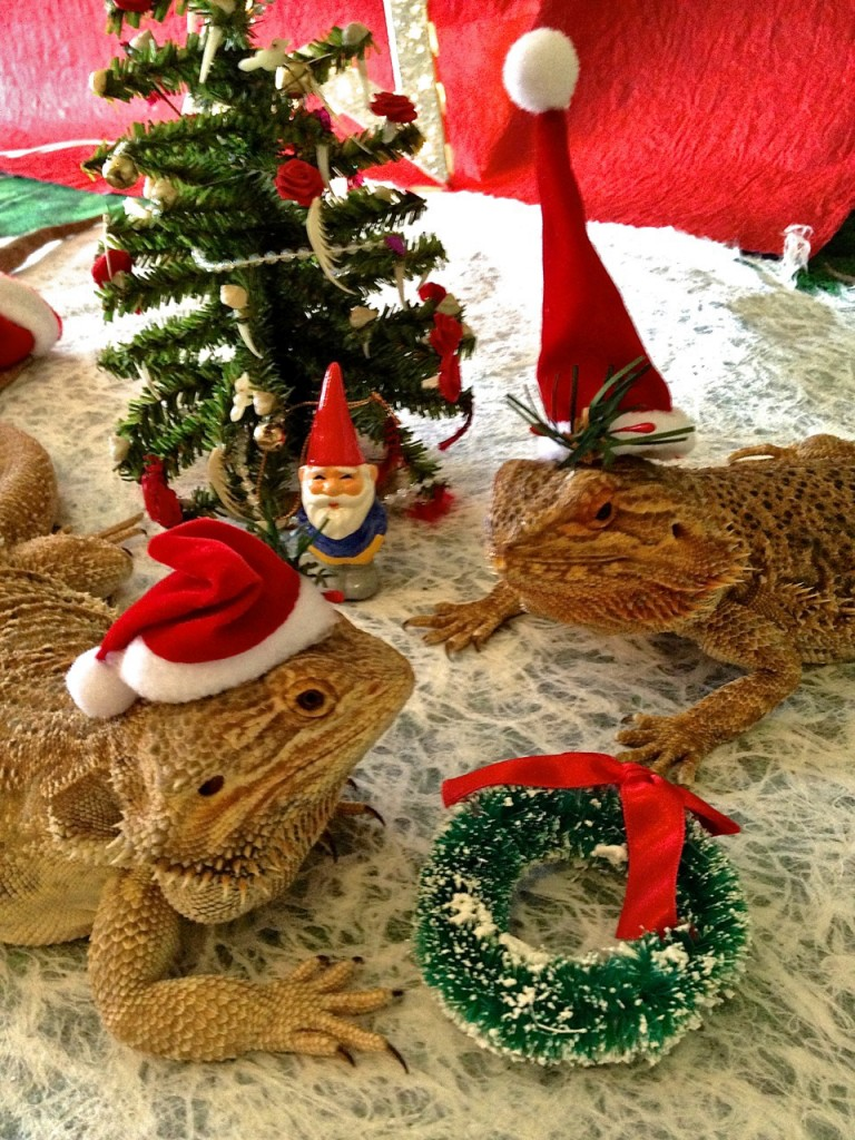 the lizards celebrate the holidays at marty magic